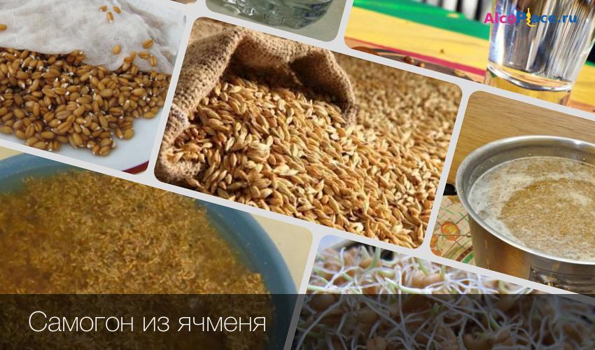 Зерновая брага для самогона из пшеницы ячменя или ржи без дрожжей