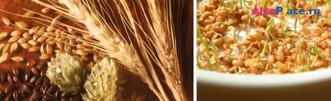Как приготовить самогон из пшеницы. От приготовления зерновой браги до перегонки