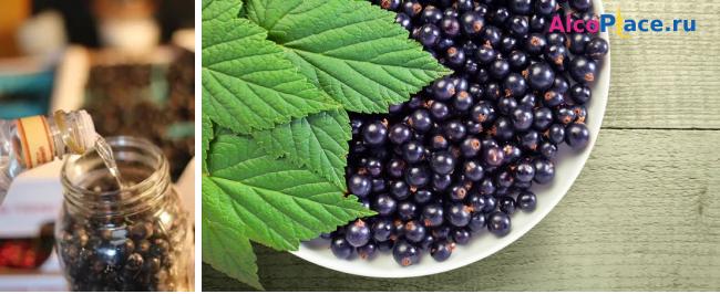Как в домашних условиях приготовить вкусный ликер из черной смородины