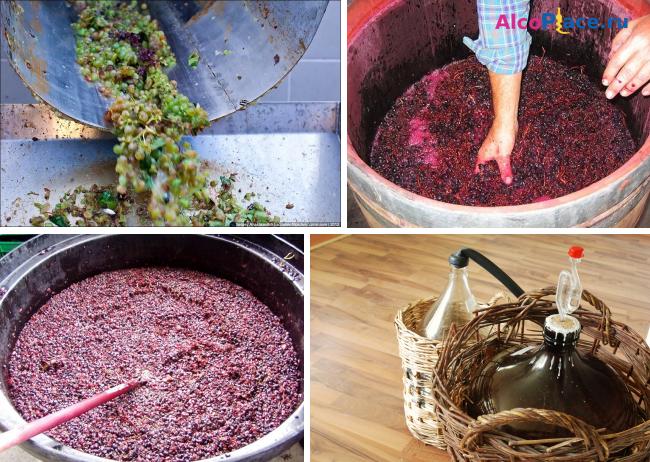Дрожжи для вина из винограда в домашних условиях рецепт 169