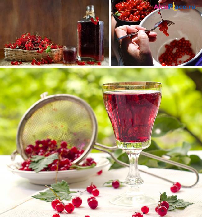 Рецепт сухого вина из красной смородины в домашних условиях 304