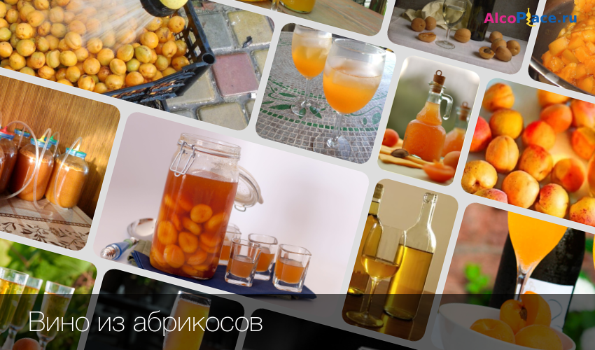Сделать вино из абрикосов в домашних условиях рецепт 406