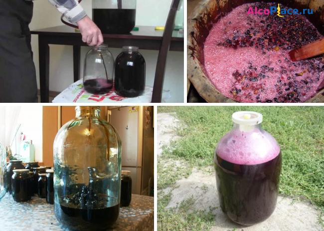 Сделать вино из изабеллы в домашних условиях 903