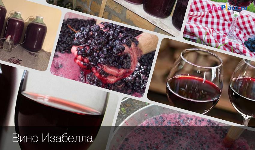 Вино домашнее изабелла фото